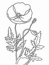 Template Poppy Remembrance Coloring Pages Flower Colouring Printable Drawing Poppies Flowers Templates Memorial Sheets Outline Pdf Sketch A4 Recommended Craft sketch template