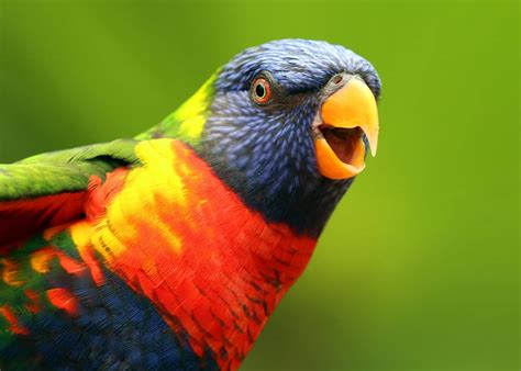 most colorful birds 26 of the most colorful birds on the planet and where to