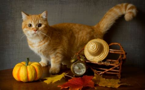 Myxer Wallpapers Animals - still cats animals background wallpapers on