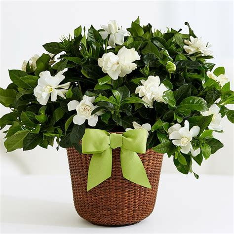 interior house plants plantas de interior con flor plantas de interior con flor