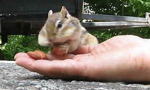Chipmunk GIFs - Find & Share on GIPHY