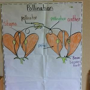 Pollination Plants
