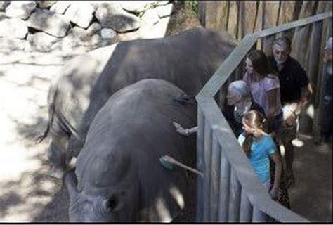 toddler hurt falling  rhino exhibit  florida zoo