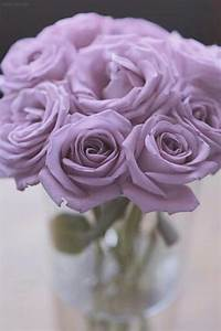 Lavender roses - my most romantic boyfriend once told me ...