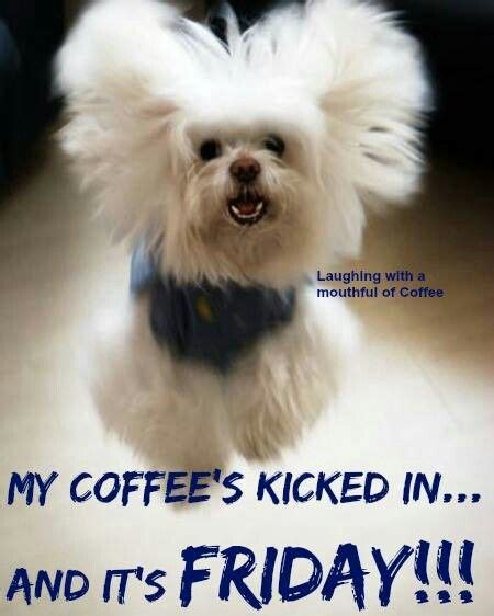 Your new favorite friday cup! My Friday Coffee Even tastes better! ;)☕ | Its friday quotes, Funny animal pictures, Friday humor