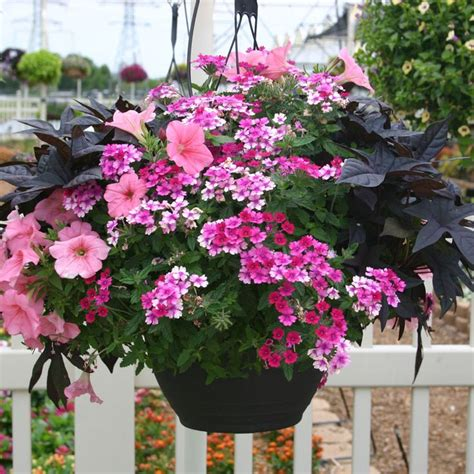 annual flowering bushes 100 ideas to try about flowers gardens containers perennials annuals gardens window