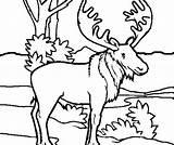 Moose Coloring Head sketch template