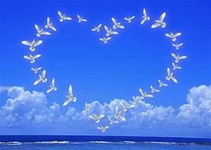 Bonjour La Haut : les oiseaux sont nos messagers et ils m ritent d 39 tre observ s ~ Medecine-chirurgie-esthetiques.com Avis de Voitures