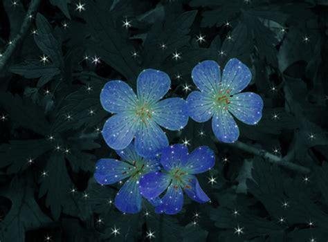 moon flowers by na jedikittykaiba on deviantart