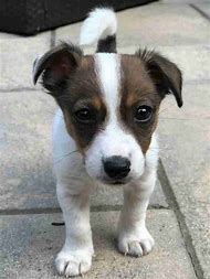 White Puppy Stop