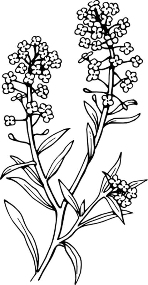 alyssum clip art  clkercom vector clip art