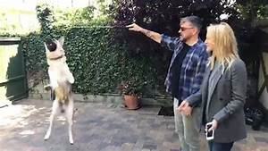 Craig Ferguson and his wife Megan playing with their Dog ...