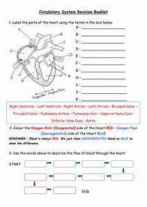 Heart  Blood Vessels  Chd  Blood Revision Booklet By
