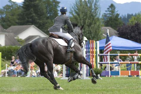 horse breeds most popular thoroughbred jumping rider horses types getty ostacoli equestre salto cavallo cavaliere feinman debra jump strip cheval