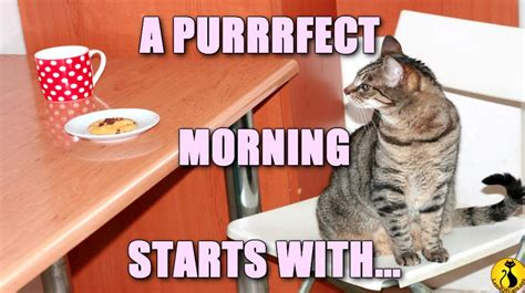 Purrrfect Meme - how to start a purrrfect day land of cats
