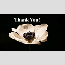 Download Thank You Hd Images For Ppt, Whatsapp, Facebook  Social Lover
