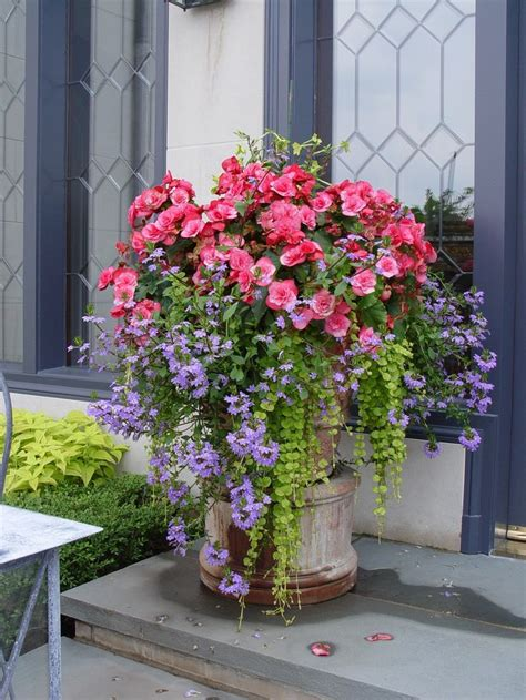558 Best Containers (summer) Ideas From The Barn Nursery