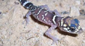 Snake and lizard ancestor may have birthed live young ...