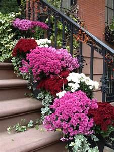 Herbstdeko Für Den Garten : chrysantheme im herbst wissenswertes und n tzliche tipps ~ Orissabook.com Haus und Dekorationen
