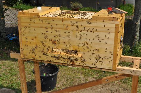 Darf Bienen Im Wohngebiet Halten by Darf Bienen Im Wohngebiet Halten Urteile Gericht 100