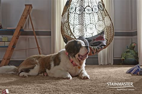 pet friendly carpet pad floor matttroy