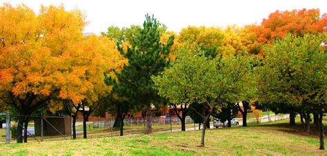 Up With Trees Tulsa | Free Trees | Green Leaf Gala ...