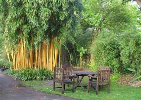 Garten Ideen Bambus by Bambus Im Garten Beste Garten Ideen Bambus Und Gr 228 Ser