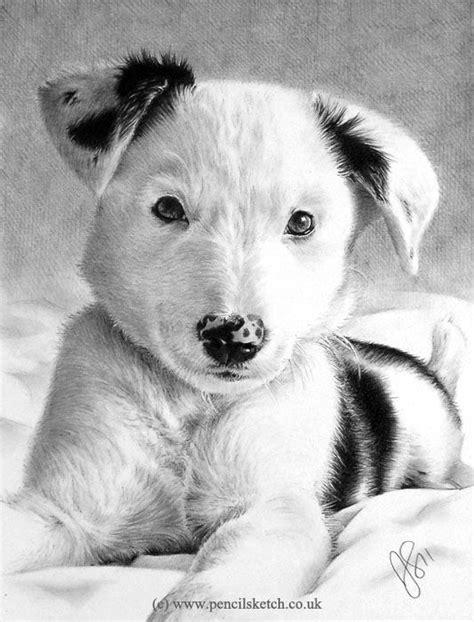 images  dogs  wont    pencil