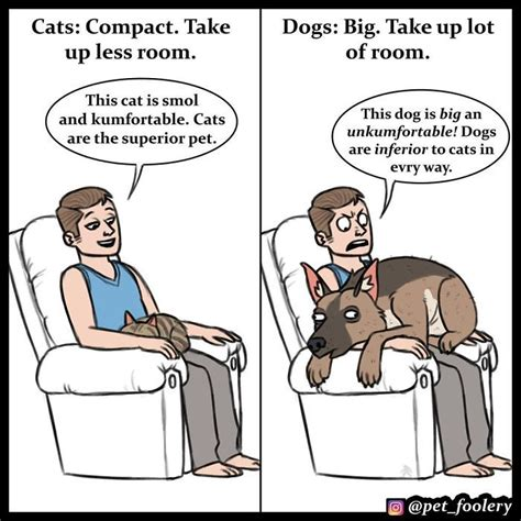 cats better dogs than why comics then cat explaining reasons funny superior hilarious pet foolery boredpanda decided lot these izismile