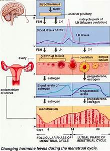 Basic Of Menstrual Period  Girls Must Look And Understand