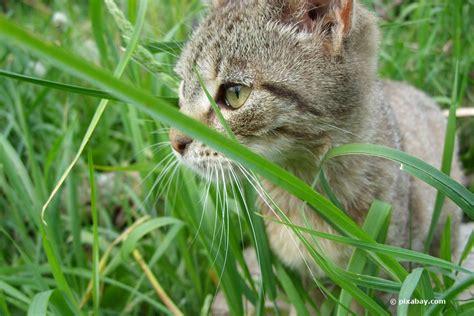 Pflanzen Für Katzen Geeignet by Ungiftige Zimmerpflanzen F 252 R Katzen 15 Gr 252 Ne Bl 252 Hende