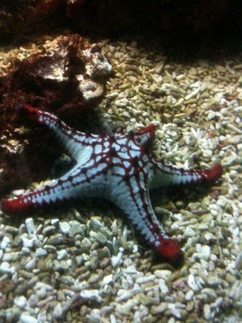 aquarium de vincennes gem la porte bonheur sortie 224 l aquarium de vincennes