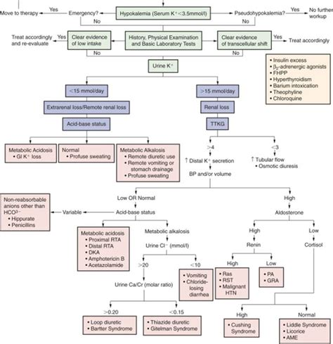 Disorders Of Potassium Balance Brenner And Rectors The