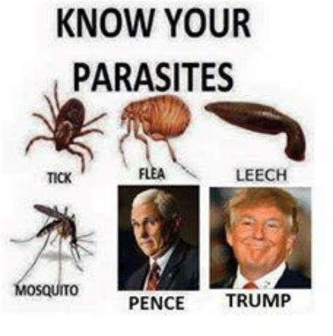 Now Your Meme - know your parasites leech tick pence trump meme on sizzle
