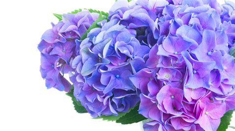 welche blumen blühen im juni welche blumen gibt es im juni schnittblumen saison kalender blumigo