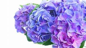 Welche Bäume Blühen Jetzt : welche blumen gibt es im juni schnittblumen saison kalender blumigo ~ Buech-reservation.com Haus und Dekorationen