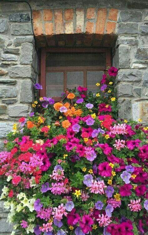 fiori da davanzale fiori immagini fiori da balcone fioriere per