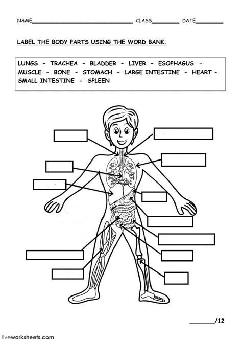 The Human Body  Interactive Worksheet