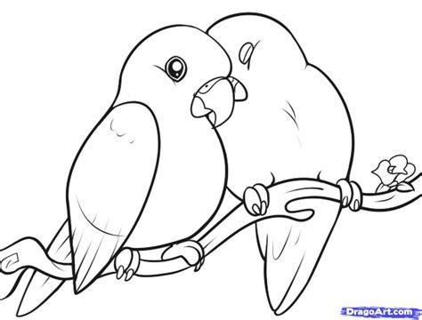 draw lovebirds step  birds animals