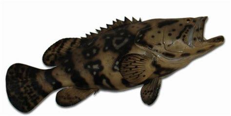 grouper goliath replica fish inch