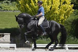 Two Month Calendar Video Dressage Star Totilas Injured In Training Two Days