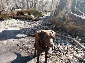 Bodenbelag Für Hunde Geeignet : welche hunde sind f r den dogscooter geeignet ~ Lizthompson.info Haus und Dekorationen