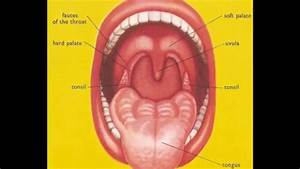 What Are Tonsils And Adenoids  Sore Throat Pain  In