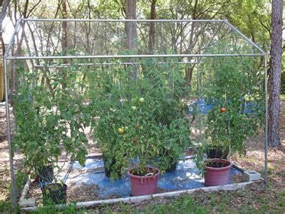chicken wire mesh   garden  fence raised bed trellis