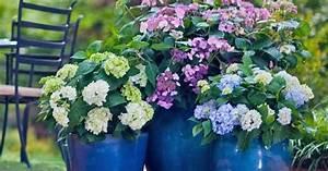 Hortensien Wann Pflanzen : 39 endless summer 39 neue fterbl hende hortensien mein ~ Lizthompson.info Haus und Dekorationen
