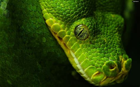 Green Animal Wallpaper - beautiful animal high resolution wallpapers a and
