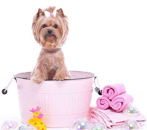 grooming spa services golrusk pet care center