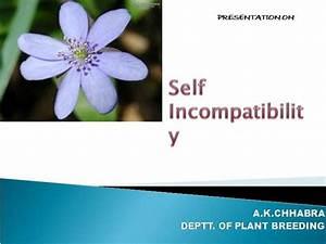 Self Incompatibility Akc