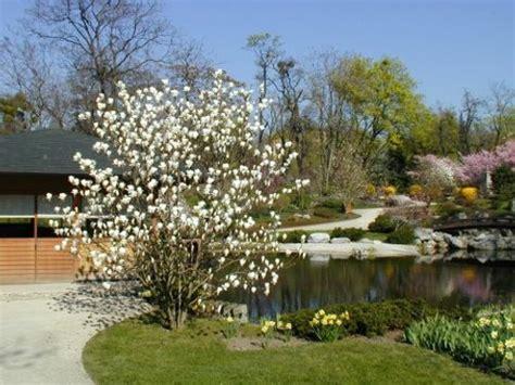 Japanischer Garten Wien Kirschblüte by Setagayapark Ein Japanischer Garten In D 246 Bling