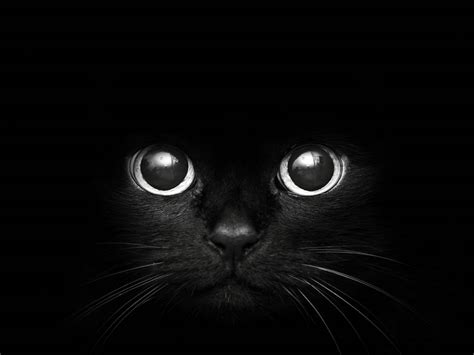Background Black Cat black cat background blue black cat background 21836